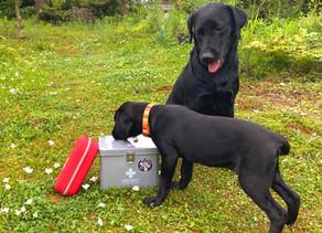 愛犬のための救急箱