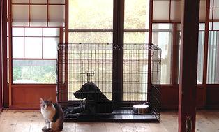 ケージに入ってるラブラドールと外にいる猫