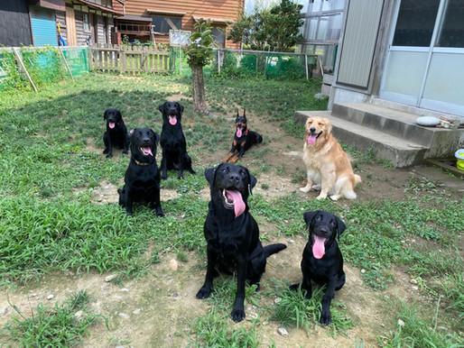 ドッグトレーナーが子犬を育てるPT6(最終回)