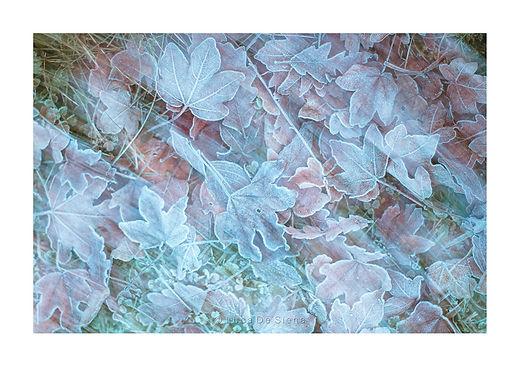 Frosty leaves.jpg