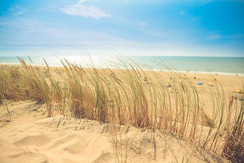 Canva - Brown Sand Beach (1).jpg