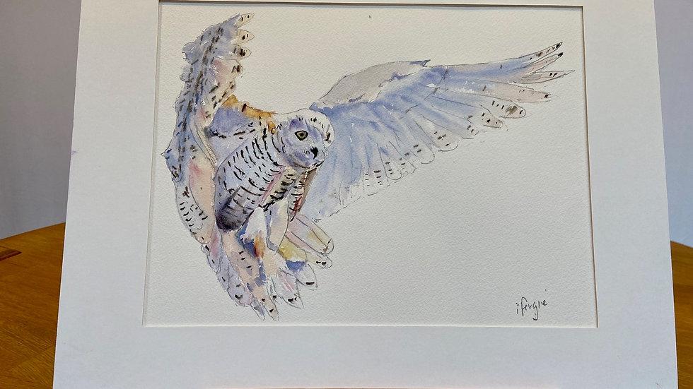 Snow Owl Painting