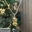 Thumbnail: Zodiac Necklace