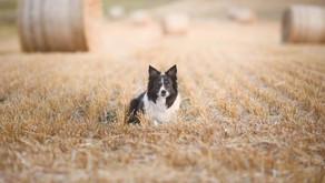 Benefits Of Grain Free Pet Food