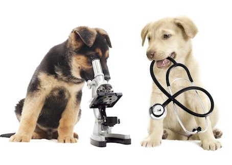 Questions For The Doctor With Dr. Velez And Dr. Stobaeus: Vaccines For Dogs?