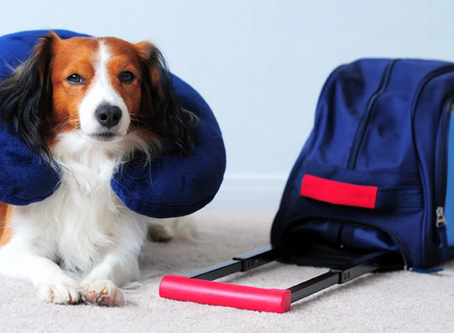 How To Prepare Your Pet For Holiday Travel
