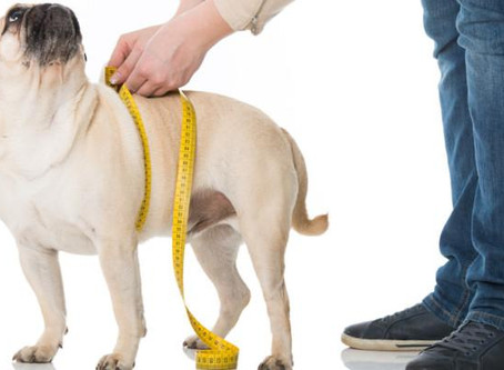 Get The Facts On Pet Obesity: The Silent Killer