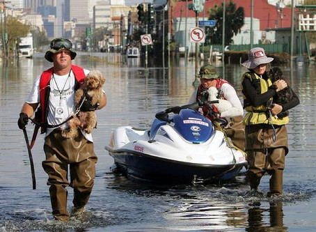 Keeping Our Pets Safe: Protecting Our Pets In Hurricanes And Other Disasters