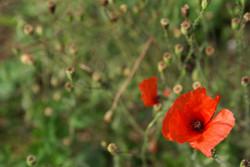 Photographie Fleur, Flore