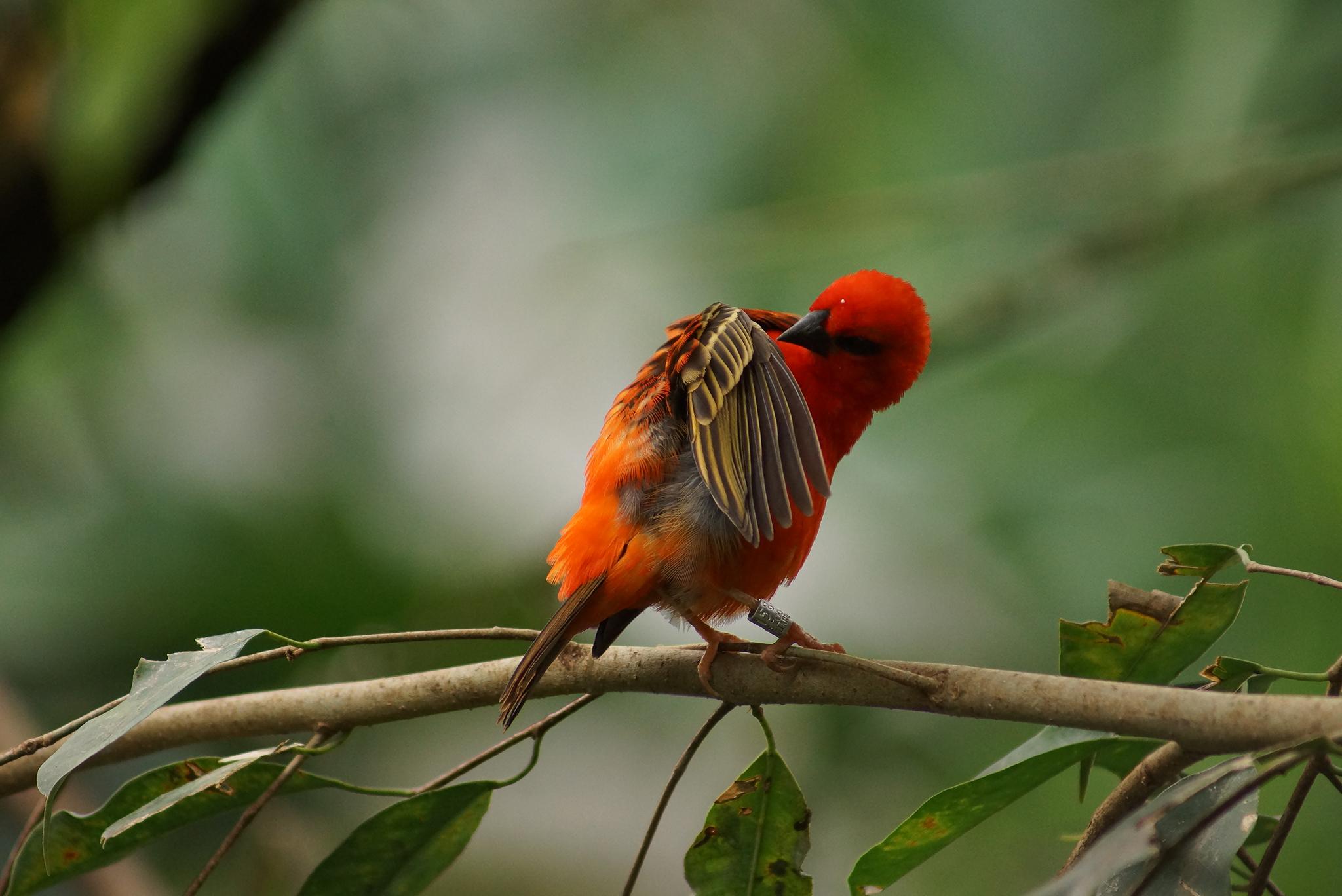 Photographie Faune, Animal, Oiseau
