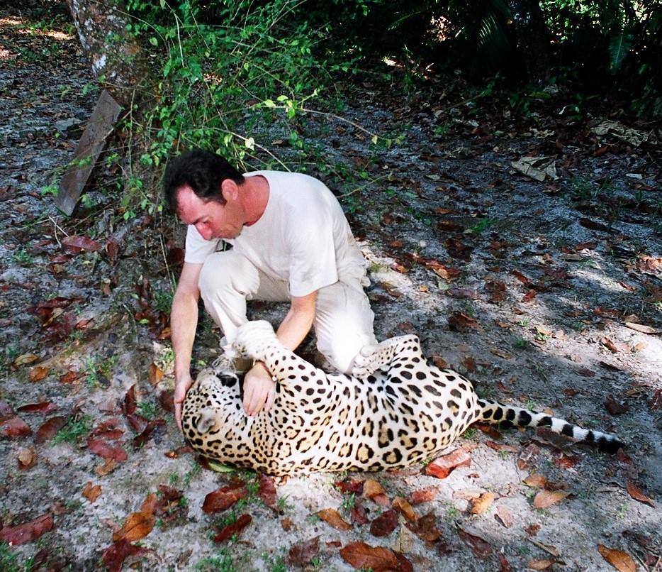 Conflits dans la Jungle