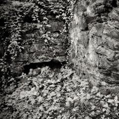 castle Wildhaus 4