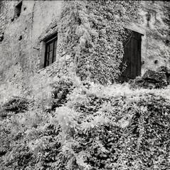 castle Altenburg 3