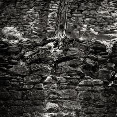 castle Wiederdriess 5