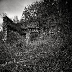 manor Snosetch 3