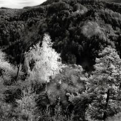 castle Scharffenberg 2