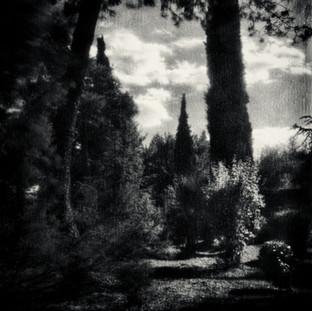 peter's garden 1