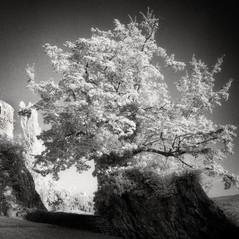 castle Montpreis 1
