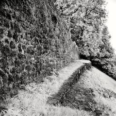 castle Altenburg 4