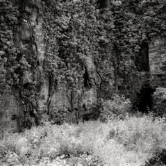 castle Walderstein 6