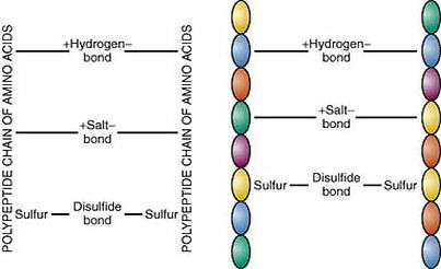 Hair-Amino Acids