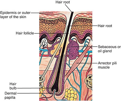 luxurianceproducts hair structure