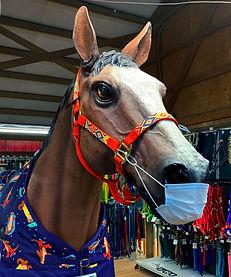 snohomish-co-op-masked-horse.jpg