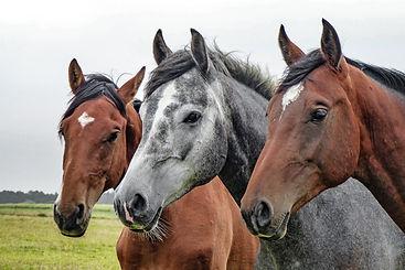 three-horses