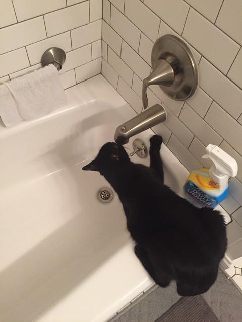 Whisper, the winning feline, enjoying his penchant for running water.