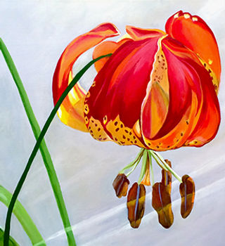 moment_in_sun_lily_small.jpg