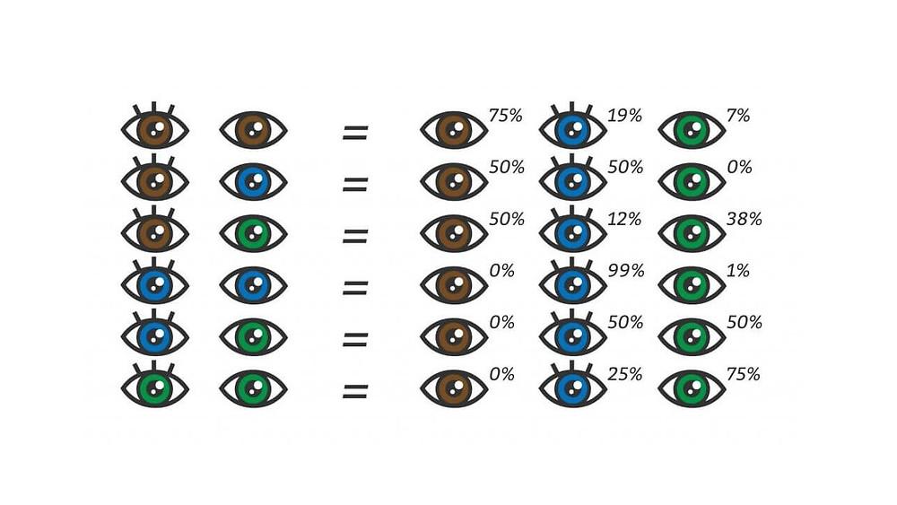 Anlattığımız ayrıntıları özetlemek gerekirse; göz renginde en baskın renkler sırayla mavi, kahverengi ve yeşildir. Saç renginde en baskın renkler ise sırayla siyah, kahverengi, sarı ve kızıldır. Bebek göz ve saç rengi genel olarak en baskın renge göre şekillenir.  Anne ve babadan gelen genlerin birleşerek bireydeki geni oluşturması anlamına gelen alel gen faktörünü unutmamak gerekiyor. Baskın olmasa da alel gende bulunan göz ve saç rengi genleri nedeniyle bebek göz ve saç renginde her zaman olmasa bile küçük sürprizler ile karşılaşabilirsiniz. Hatta bu sürpriz faktörünün iki ya da üç kuşak öncesinden geldiği bile görülmüştür.  Kız olsun, erkek olsun, mavi gözlü olsun, siyah saçlı olsun ama ne olursa olsun ilk önce her anne - babanın sağlıklı bir evladı olsun. Anlattığımız basit hesaplama yöntemi ile bebeğiniz daha doğmadan göz ve saç rengi nasıl anlaşılır sorusunun yanıtını alabilirsiniz. Genom çalışmaları böyle devam ederse belki önümüzdeki yıllarda göz ve saç rengi anne ve baba tarafından seçilecek özellikler haline bile gelebilir.