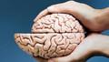 IQ Seviyesini Artırmak İsteyenler Doluşsun: Beyindeki 'Gri Madde' Nasıl Artırılır?