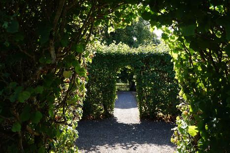 den smukke alle i Visborggaards have.jpg