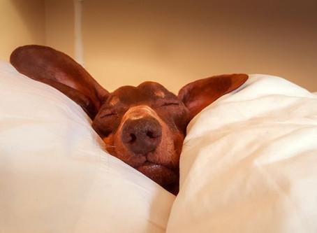 Day 12 - Now I Lay Me Down to Sleep...