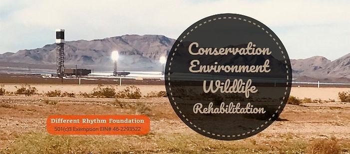 environment_renewable.jpg