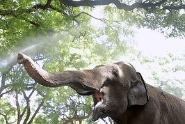 2) Mara, el viaje de la elefanta.jpg