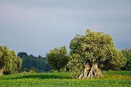 5) El paisaje del olivar fotograma.jpg