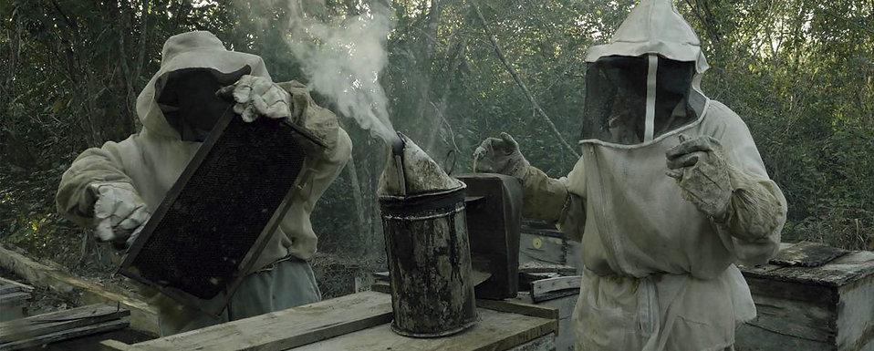 ¿Qué les pasó a las abejas?.jpg