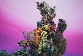 11) La tortuga de plástico.JPG