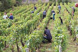 4) L´Ame du vin.jpg