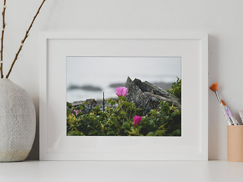 The Flower, The Rock and the Ocean, Ogunquit, ME