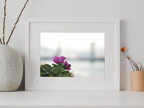 Kittery Bridge, Portsmouth Flower