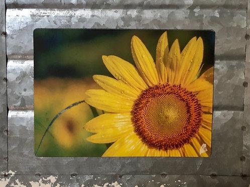 Single Sunflower Magnet