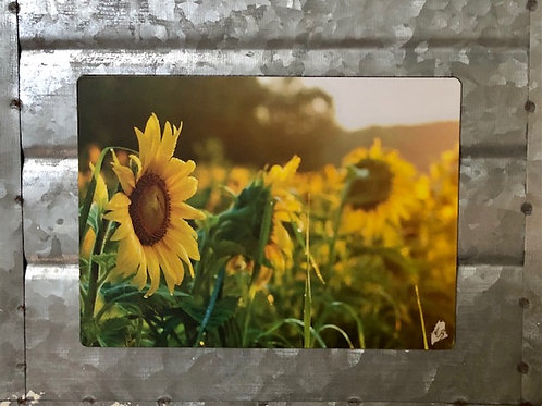 Field of Sunflowers Magnet