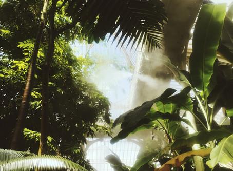 Tips for responsible jungle trekking.