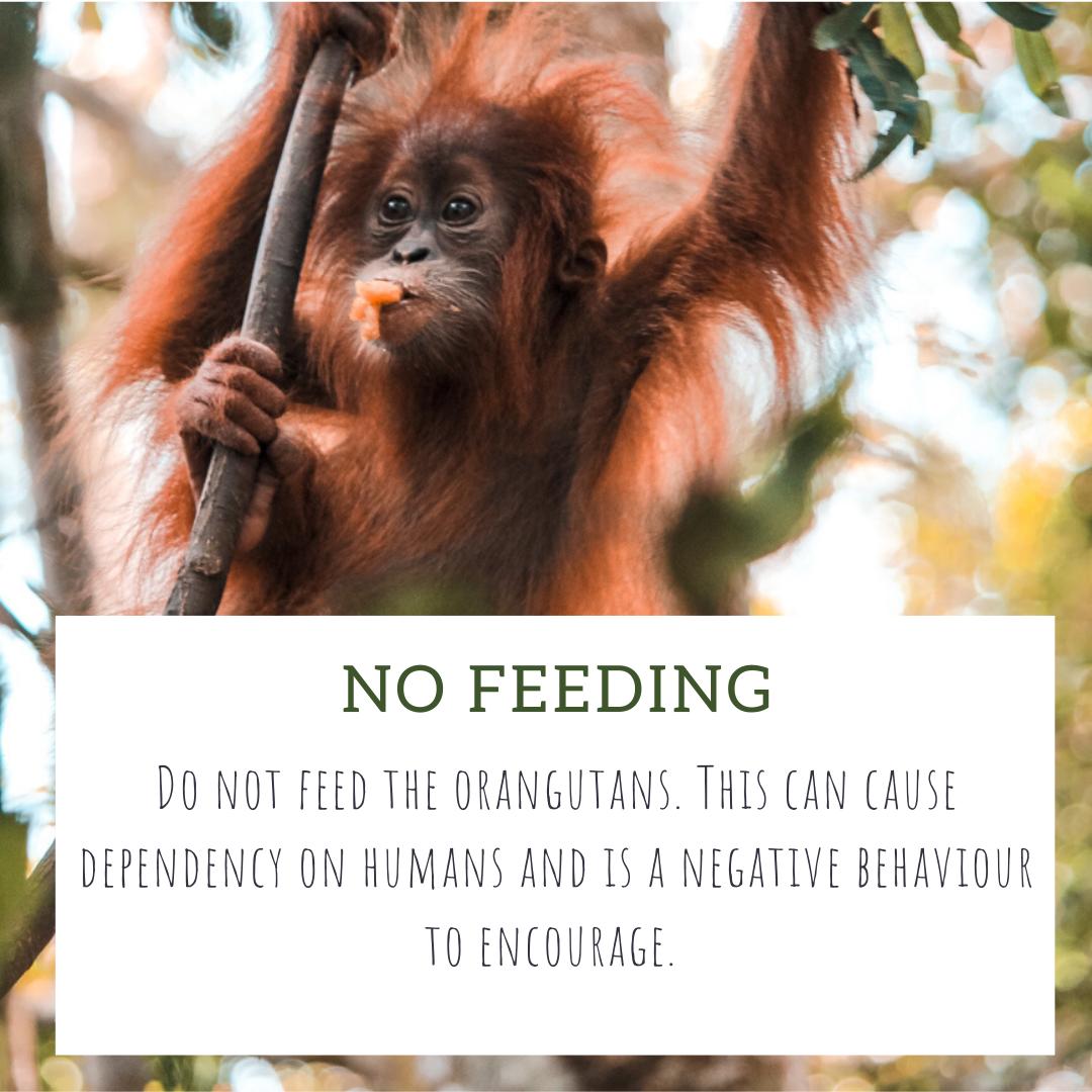 no feeding