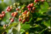 rodrigo-flores-sn87TQ_o7zs-unsplash.jpg