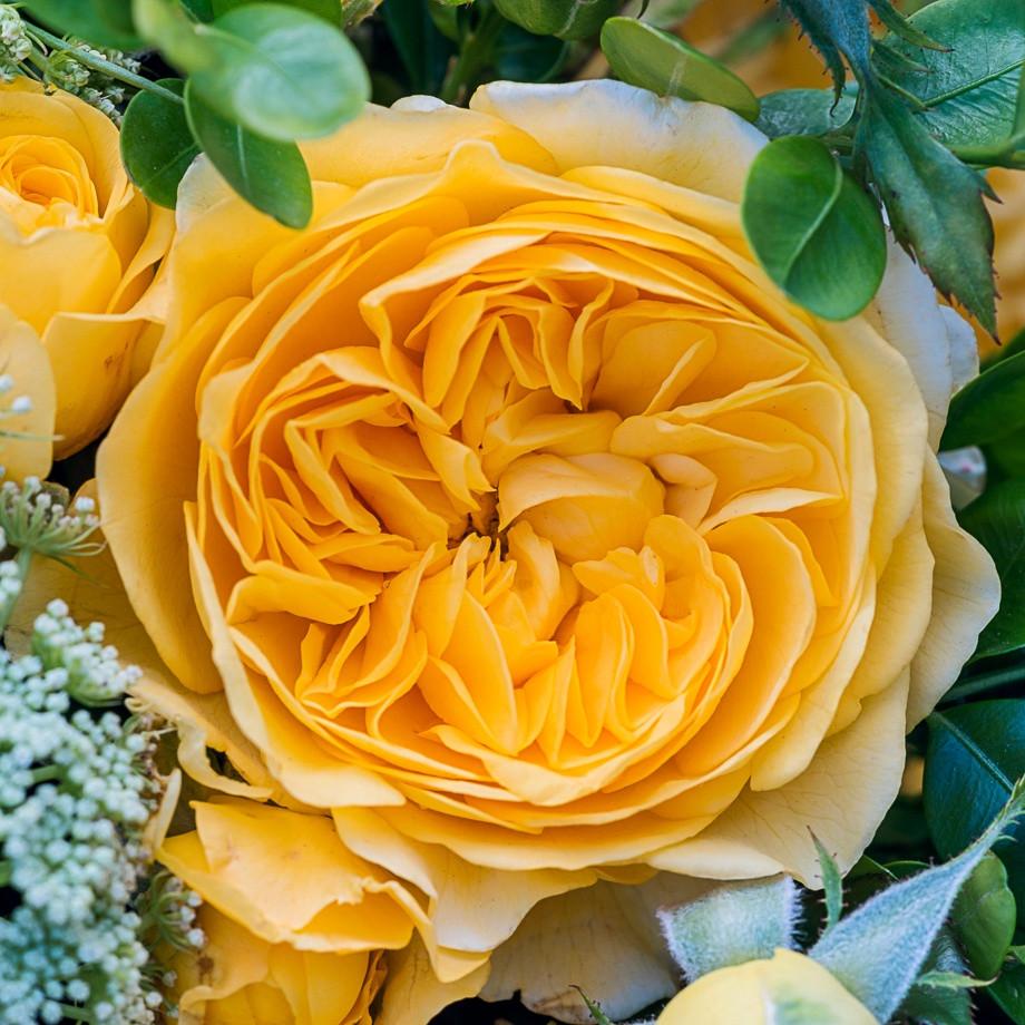 Rosa Inka1.jpg