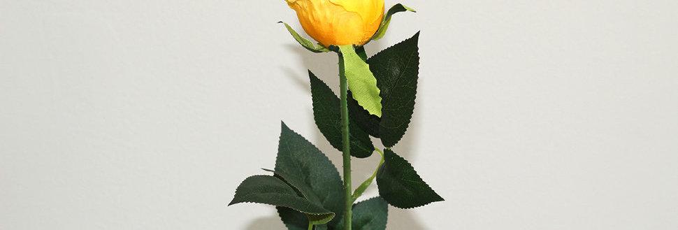 Роза Торонто желтая