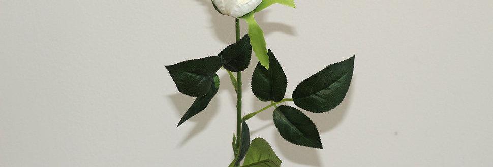 Роза Торонто белая
